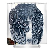 Cockatiel 1 Shower Curtain