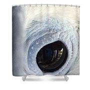 Cockatiel Eye Shower Curtain