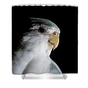 Cockatiel Shower Curtain