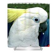 Cockatoo Bird Shower Curtain
