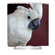 Cockatoo Portrait Shower Curtain