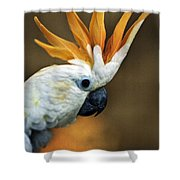 Cockatoo Show Off Shower Curtain
