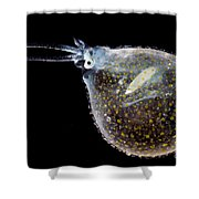 Cockatoo Squid Shower Curtain