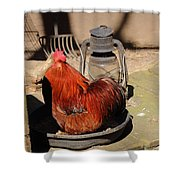 Cockerel And Storm Lamp Shower Curtain