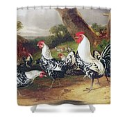 Cockerels In A Landscape Shower Curtain