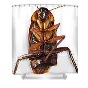 Cockroach Carcass Shower Curtain