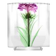 Cockscombs Flower, X-ray Shower Curtain
