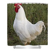Cocky Shower Curtain