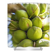 Coconut Bunch Shower Curtain