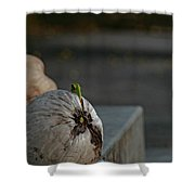 Coconut Cover Shower Curtain