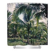 Coconut Farm Shower Curtain