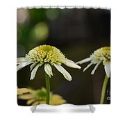 Coconut Lime Echinacea Shower Curtain