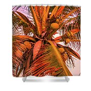 Coconut Sunset Shower Curtain