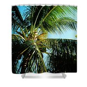 Coconut Tree Shower Curtain