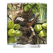 Coconuts Shower Curtain