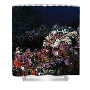 Cocos Island Octopus Hiding On Reef Shower Curtain