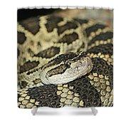 Coiled Rattlesnake Shower Curtain