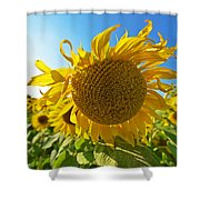 Colby Farms Sunflower Field Newbury Ma Ball Of Fire Shower Curtain