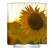 Colby Farms Sunflower Field Newbury Ma Closeup Sunset Shower Curtain