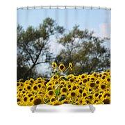 Colby Farms Sunflower Field Newbury Ma Standing Tall Shower Curtain
