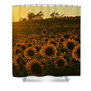 Colby Farms Sunflower Field Newbury Ma Sunset Shower Curtain