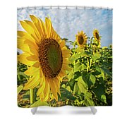 Colby Farms Sunflower Field Side Shower Curtain