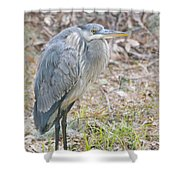Cold Blue Heron Shower Curtain