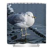 Cold Feet Shower Curtain
