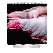 Cold Flamingo Shower Curtain
