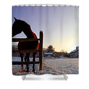 Cold Morning Shower Curtain