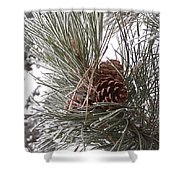Cold Pine Shower Curtain