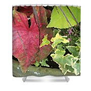 Coleus And Ivy Shower Curtain