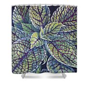 Coleus Leaves Shower Curtain