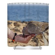 Collared Dove Feeding From A Hand Shower Curtain