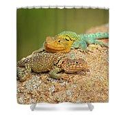 Collared Lizards Shower Curtain
