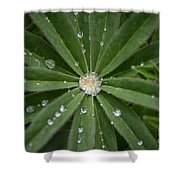 Collecting Rain Shower Curtain