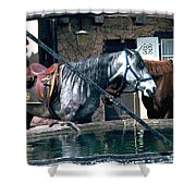 Colmar II Shower Curtain