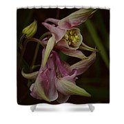 Columbine Curve Shower Curtain