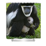 Colobus Monkey With Baby Shower Curtain