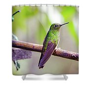 Colombian Hummingbird Shower Curtain