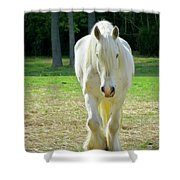 Colonial Horse In Williamsburg Shower Curtain