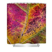 Color And Texture Shower Curtain