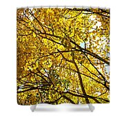 Colorado Aspens In Fall Shower Curtain