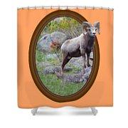 Colorado Bighorn Shower Curtain