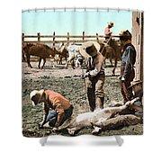 Colorado: Branding Calves Shower Curtain