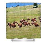 Colorado Elk Herd Shower Curtain