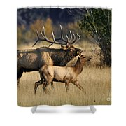 Colorado Elk  Shower Curtain