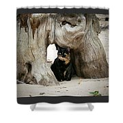 Colorado Giant Tortoise Shower Curtain
