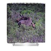 Colorado Moose  Shower Curtain