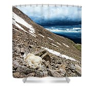 Colorado Mountain Goat Shower Curtain